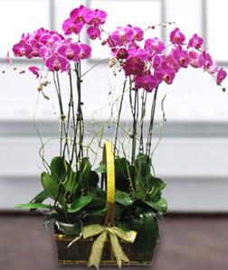 4 dallı mor orkide  Samsun çiçek siparişi sitesi