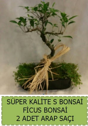 Ficus S Bonsai ve arap saçı  Samsun uluslararası çiçek gönderme