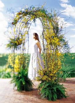 Samsun kaliteli taze ve ucuz çiçekler  güller ve mevsim çiçegi
