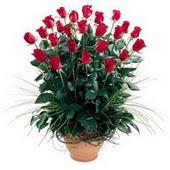 Samsun çiçek yolla  10 adet kirmizi gül cam yada mika vazo