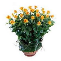 Samsun çiçek gönderme sitemiz güvenlidir  10 adet sari gül tanzim cam yada mika vazoda çiçek