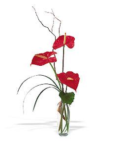 Samsun çiçek mağazası , çiçekçi adresleri  cam yada mika Vazoda 3 adet  antoryum