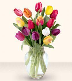 Samsun güvenli kaliteli hızlı çiçek  13 adet cam yada mika vazoda laleler