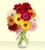 Samsun internetten çiçek siparişi  cam yada mika vazoda 15 özel gerbera