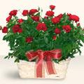 Samsun çiçek siparişi vermek  11 adet kirmizi gül sepette