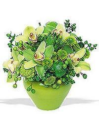 cam yada mika vazoda 5 adet orkide   Samsun çiçekçiler