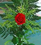 1 adet kirmizi gül buketi   Samsun online çiçekçi , çiçek siparişi