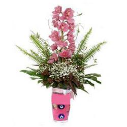 Samsun çiçek online çiçek siparişi  cam yada mika vazo içerisinde tek dal orkide çiçegi