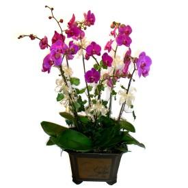 Samsun İnternetten çiçek siparişi  4 adet orkide çiçegi
