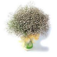 Samsun hediye çiçek yolla  cam yada mika vazo içerisinde cipsofilya demeti