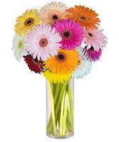Samsun yurtiçi ve yurtdışı çiçek siparişi  Farkli renklerde 15 adet gerbera çiçegi