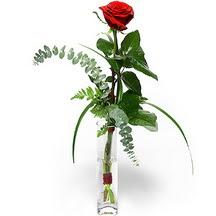 Samsun çiçek gönderme  Sana deger veriyorum bir adet gül cam yada mika vazoda