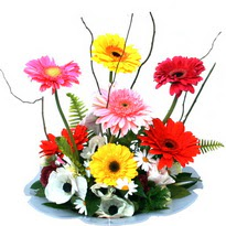Samsun çiçek online çiçek siparişi  camda gerbera ve mis kokulu kir çiçekleri