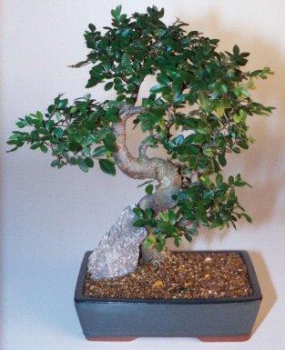 Samsun online çiçek gönderme sipariş  ithal bonsai saksi çiçegi  Samsun çiçek mağazası , çiçekçi adresleri