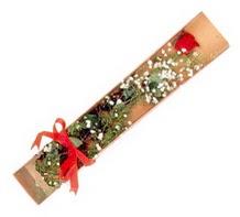 1 adet kirmizi gül  Samsun uluslararası çiçek gönderme