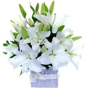 Samsun cicek , cicekci  2 dal cazablanca vazo çiçeği