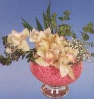 Samsun hediye çiçek yolla  Dal orkide kalite bir hediye