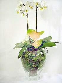 Samsun 14 şubat sevgililer günü çiçek  Cam yada mika vazoda özel orkideler