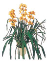 Samsun güvenli kaliteli hızlı çiçek  Orchiede ithal büyük boy saksi