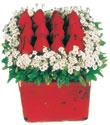 Samsun cicekciler , cicek siparisi  Kare cam yada mika içinde kirmizi güller - anneler günü seçimi özel çiçek