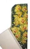Samsun cicekciler , cicek siparisi  Kutu içerisine dal cymbidium orkide