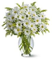 Vazo içerisinde beyaz krizantem çiçekleri  Samsun çiçek servisi , çiçekçi adresleri