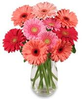 vazo içerisinde 13 adet gerbera çiçeği  Samsun çiçek mağazası , çiçekçi adresleri