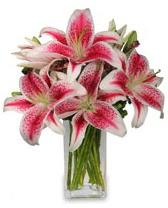 Vazo içerisinde 5 dal kazablanka çiçeği  Samsun çiçek gönderme sitemiz güvenlidir