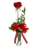 vazo içerisinde 1 adet kırmızı gül  Samsun uluslararası çiçek gönderme