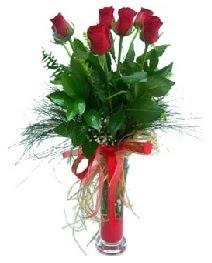 vazo içerisinde 5 kırmızı gül  Samsun çiçek siparişi sitesi
