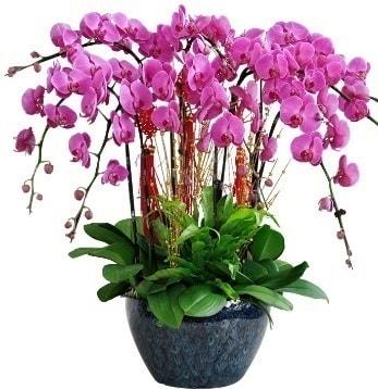 9 dallı mor orkide  Samsun çiçek gönderme