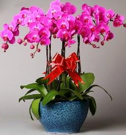 7 dallı mor orkide  Samsun çiçek , çiçekçi , çiçekçilik