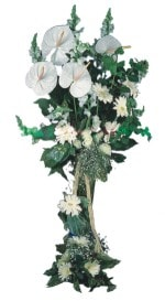 Samsun hediye çiçek yolla  antoryumlarin büyüsü özel