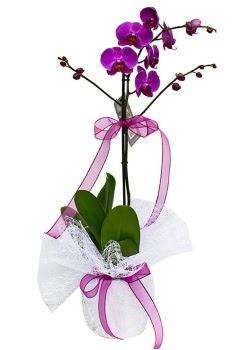 Tek dallı mor orkide  Samsun uluslararası çiçek gönderme