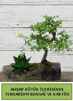 Ahşap kütük bonsai kaktüs teraryum  Samsun yurtiçi ve yurtdışı çiçek siparişi