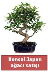 Japon ağacı bonsai satışı  Samsun çiçek mağazası , çiçekçi adresleri