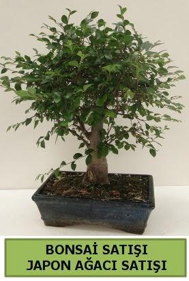 Minyatür bonsai japon ağacı satışı  Samsun online çiçek gönderme sipariş
