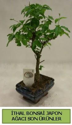 İthal bonsai japon ağacı bitkisi  Samsun çiçek satışı