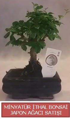 Küçük görsel bonsai japon ağacı bitkisi  Samsun anneler günü çiçek yolla