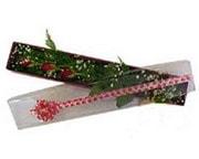 Samsun çiçek online çiçek siparişi  3 adet gül.kutu yaldizlidir.