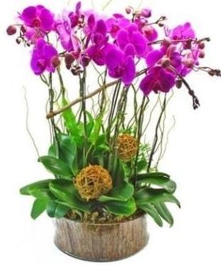 Ahşap kütükte lila mor orkide 8 li  Samsun kaliteli taze ve ucuz çiçekler