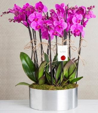 11 dallı mor orkide metal vazoda  Samsun online çiçek gönderme sipariş