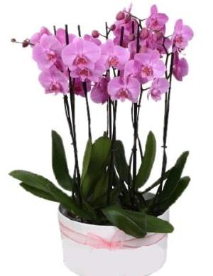 Beyaz seramik içerisinde 7 dallı mor orkide  Samsun uluslararası çiçek gönderme