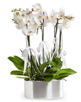Beş dallı metal saksıda beyaz orkide  Samsun cicek , cicekci