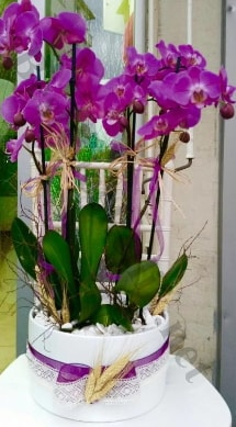 Seramik vazoda 4 dallı mor lila orkide  Samsun çiçek yolla , çiçek gönder , çiçekçi