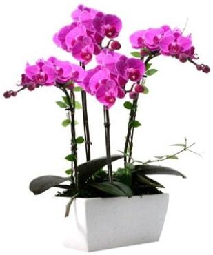 Seramik vazo içerisinde 4 dallı mor orkide  Samsun 14 şubat sevgililer günü çiçek