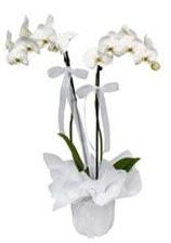 2 dallı beyaz orkide  Samsun çiçek siparişi sitesi