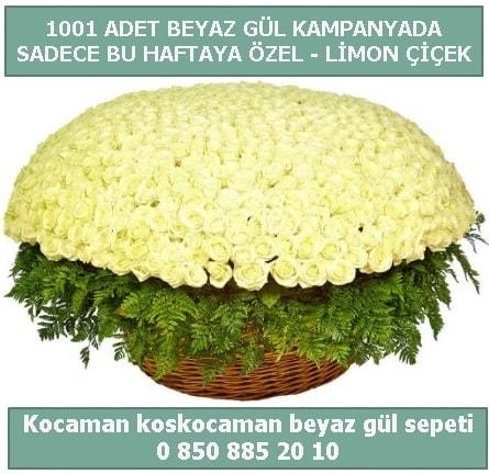 1001 adet beyaz gül sepeti özel kampanyada  Samsun online çiçek gönderme sipariş