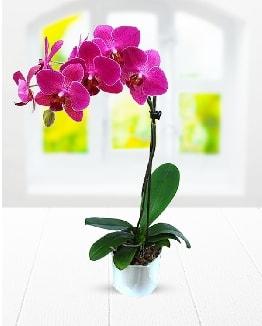 Tek dallı mor orkide  Samsun 14 şubat sevgililer günü çiçek