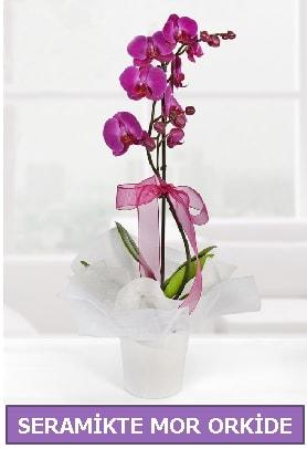 Seramik içerisinde birinci kalite tek dallı mor orkide  Samsun çiçek siparişi vermek
